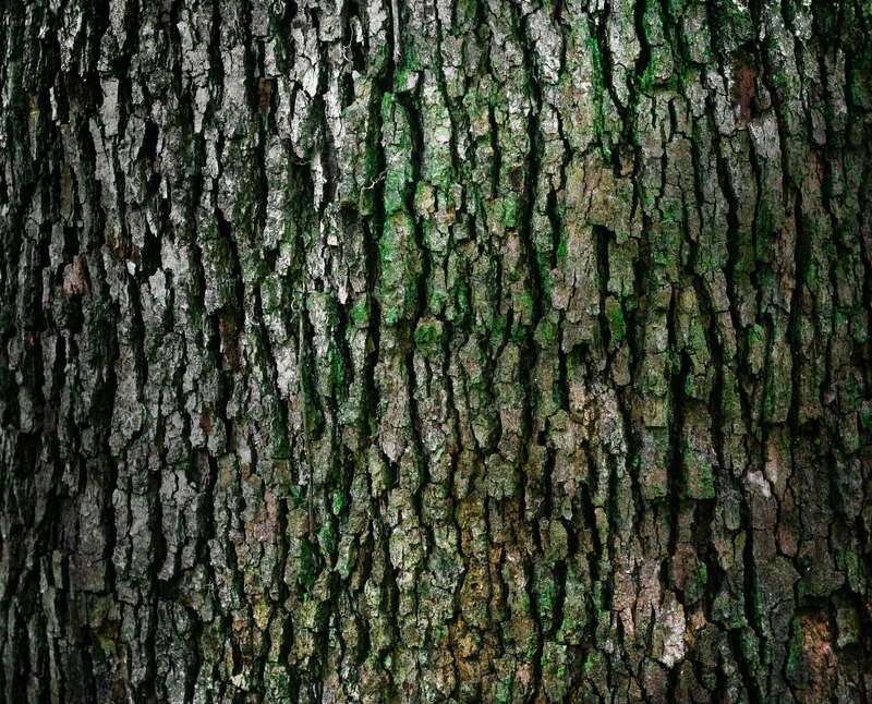 植物タンニン樹皮